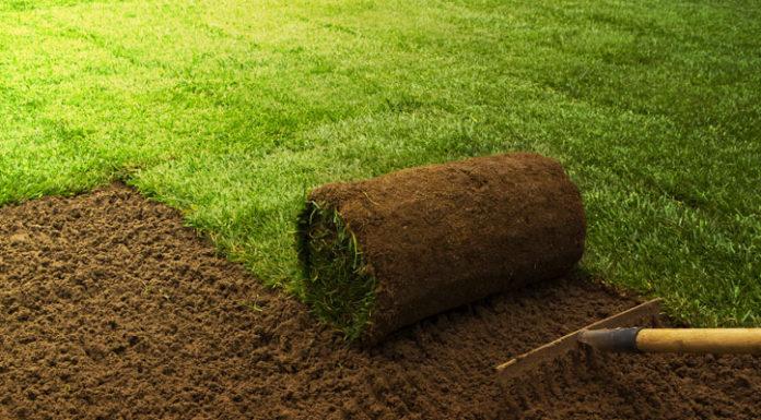 cost grass sod
