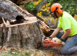 cost tree stump removal